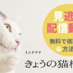 「きょうの猫村さん」の見逃し配信動画を無料で視聴する方法!
